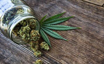 cannabis feuille fleurs bocal verre
